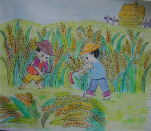 秋天小麦大丰收