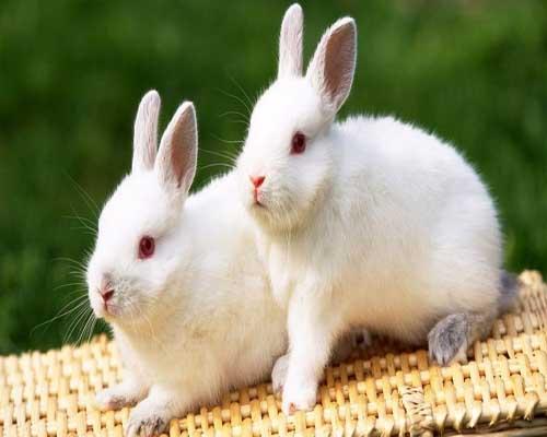 我喜欢的小白兔