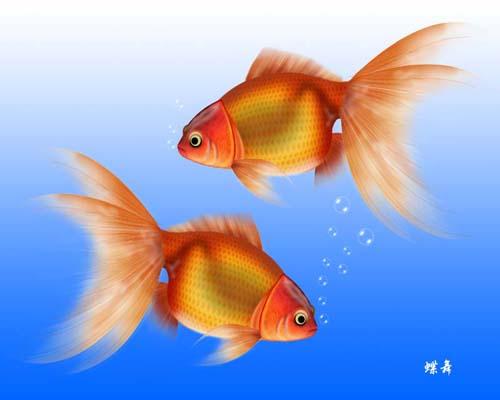 素描金鱼步骤图解