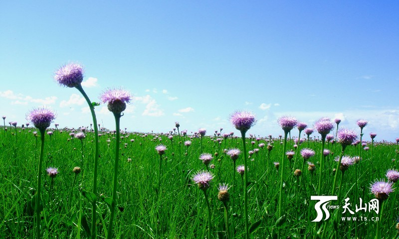 新疆库鲁斯台草原湿地风景美如画