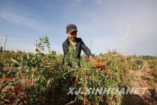 新疆和硕县乌什塔拉乡则恩格德呼都格村工作组组织