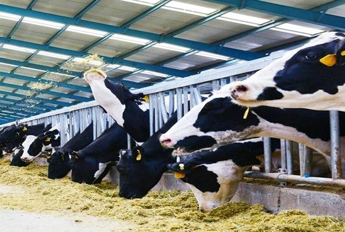 现代畜牧业进程加快 养殖户收入