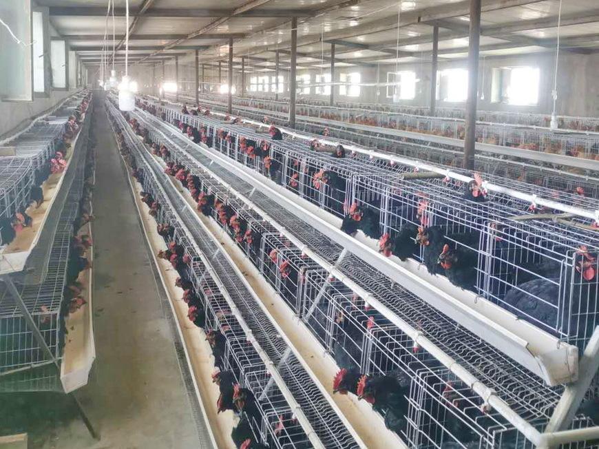 若羌县首个标准化蛋鸡养殖场建成