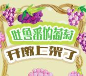 吐鲁番的葡萄开墩上架了