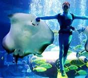 走进鳐鱼的世界 感受华美的冰海舞蹈盛宴