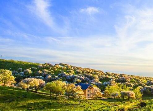 初夏新疆额敏县野果林花开遍野风光如画