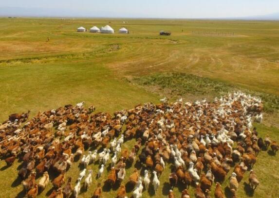 巴裏坤牲畜轉入秋牧場