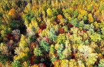 【VR全景航拍】長白山下的秋天