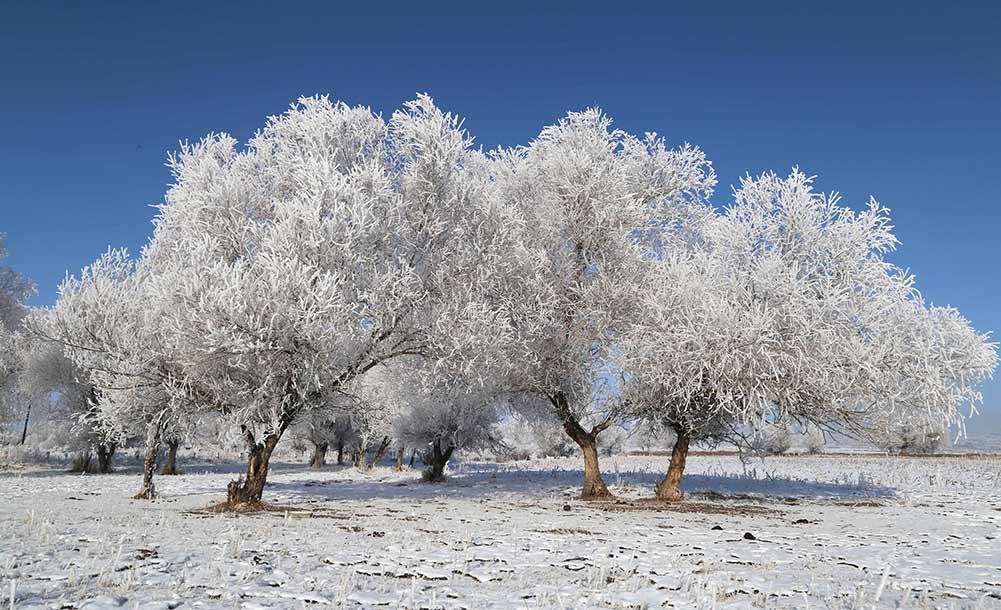 新疆阿勒泰現霧凇美景