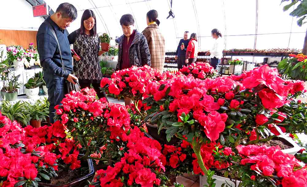 新疆哈密:农业园里春意浓