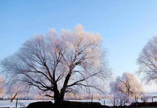 阿克加尔村雾凇美景