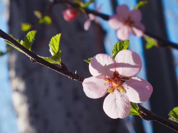 春天·万物生长