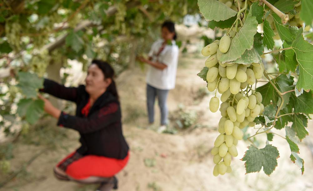 新疆:雙手鋪就幸福路