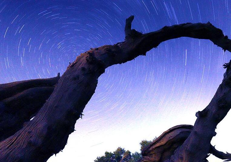 伊吾縣:星空下的胡楊林