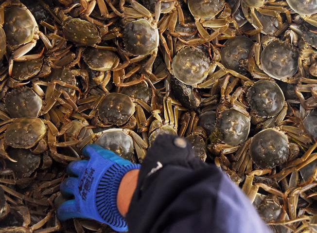 豐收大閘蟹