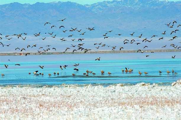 巴裏坤濕地聚大批候鳥