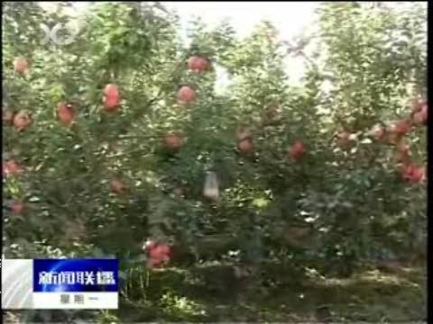 新疆将在林果主产区开展生态健康果园试点