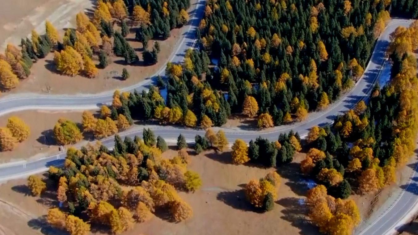 瞰中國|當秋風渲染了松林