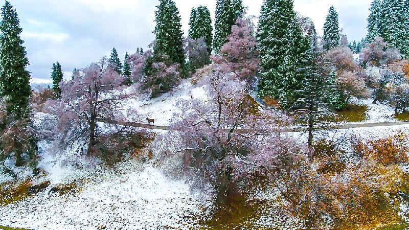 新疆新源:美景如詩畫中遊
