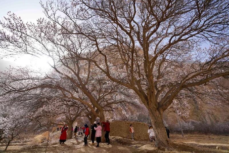 帕米爾高原:春暖花開引客來