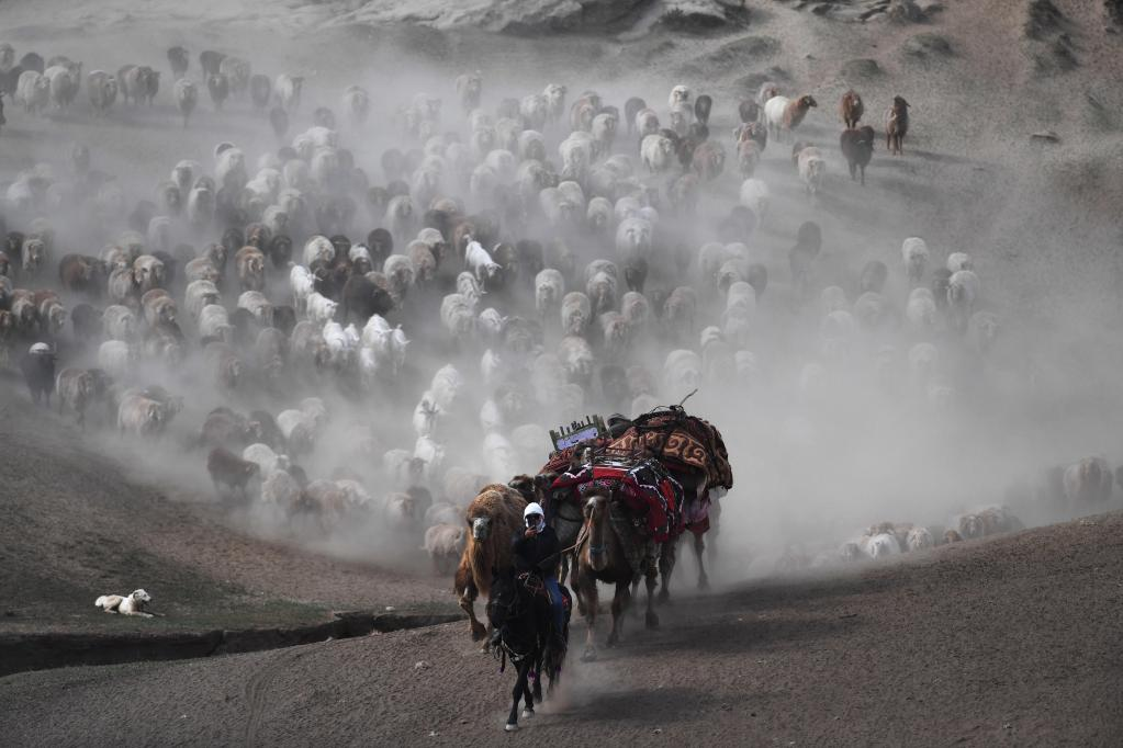 新疆阿勒泰:向夏牧場進發