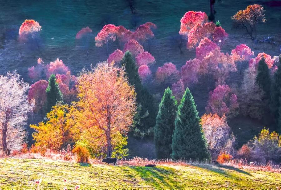 美哭!那拉提草原秋雪入畫來